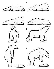 Certaines postures caractéristiques: 1.  – Au repos; 2. – À une réaction estimée; 3. – Lors de l'alimentation