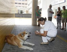 Dog Waits Outside Hospital For Sick Owner... That is what I call a 'FRIEND'... September 2016