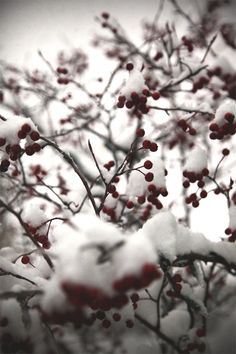 http://blog.freepeople.com/2013/12/december-christmas-tree-farm/