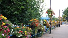 Shrewsbury in bloom (Victoria Quay)