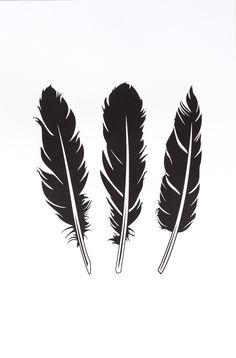 Feathers Print