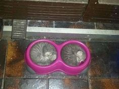 Curled up like two peas in a pod, these kittens are just small enough to be able…
