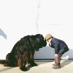 A boy and his #Newfoundland dog