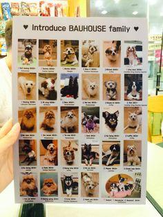 Bau House doggy cafe in Korea House Dog, Dog Houses, Dog Cafe, Seoul, Photo Wall, Random Things, Dogs, Tokyo, Korea