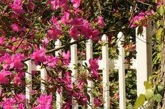 Gated flowers Summerville SC