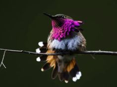 stunning photography of animals  | Posted by shailesh kumar mishra, on 02-03-2012 02:08, , Guest