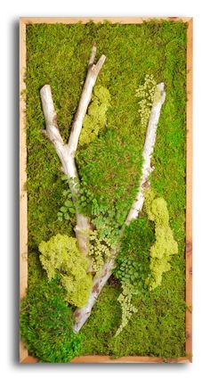 Moss wall for front window Moss Garden, Garden Art, Garden Design, Moss Wall Art, Moss Art, Indoor Garden, Indoor Plants, Indoor Outdoor, Vertikal Garden
