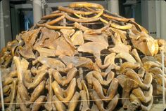 Model of a Paleolithic mammoth-bone dwelling (Ukraine to B. Ancient Art, Ancient History, Paleolithic Period, Prehistoric Period, Art Rupestre, Early Humans, Human Evolution, Ancient Mysteries, Stone Age