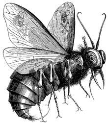 Beelzebub - Wikipedia, the free encyclopedia