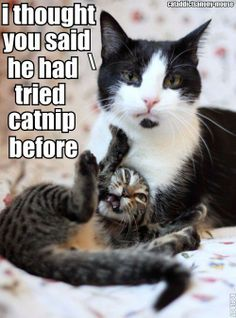 catnip :)