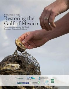 Big Victory for Gulf ~ Audubon President Comments on RESTORE Act in Transportation Bill ~ Restoring the Gulf of Mexico report -
