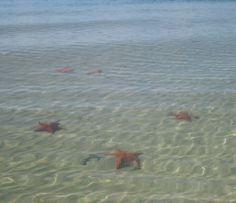 Panamá, playa de las estrellas, Isla Colón, bocas del toro