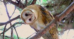 Lydia Anneli Bleth: 12 beautiful Owl-Gifs / C  source: PinterestSchlei...