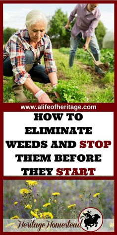 Gardening | Why my garden has weeds | Eliminating weeds | How to garden | Gardening for beginners | No Till Garden | Why does my garden have weeds? Your garden will thrive when you understanding WHY it has weeds. Eliminate them naturally while working with nature. via @delciplouffe