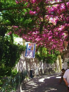 pictures under a trellis of bougainvillea would be so pretty!