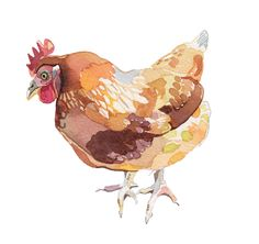Holly Exley Illustration: Chickens ~ I take my Chicken perched on my shoulder!  My favorite lovely bird...
