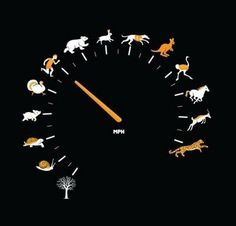 Men versus animal speeds chronometer