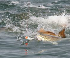 Best Fishing Lures for Redfish   Sport Fishing Magazine