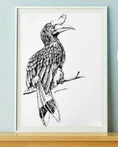 Rangkong bird sketch by Al-Taha