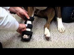 How to Measure for a Dog Splint