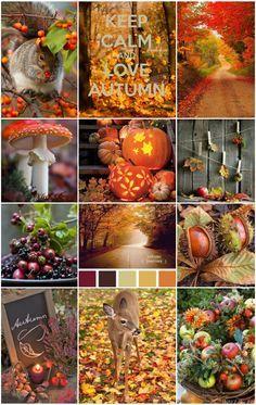 Farb-und Stilberatung mit www.farben-reich.com - Autumn Scenes: Autumn- Fall colors|Moodboards.|Busy Beesz Autumn Day, Autumn Leaves, Fall Winter, Pumpkin Leaves, Autumn Nature, Warm Autumn, Hello Autumn, Summer Fall, Autumn Scenes