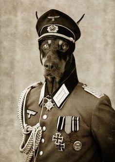 prints on steel Black & White doberman second war militar dog photo…
