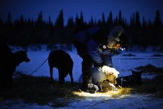 Four-time Iditarod champion Martin Buser prepares his team to leave the checkpoint in Nikolai, Alaska, during the Iditarod Trail Sled Dog Race on Tuesday, March 6, 2012. Anchorage Daily News / Marc Lester
