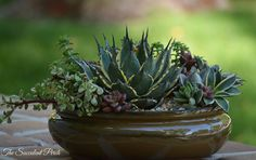 Nice succulent arrangement with an agave focal point