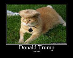 Original Donald Trump Cat Toupee Original Donald T+ Donald Trump Hair, Real Donald Trump, Funny Cats, Funny Animals, Far Side Cartoons, Funny Gifts For Him, Bad Cats, Cat Party, Cat Toys