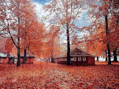 Autumn Season in Kashmir