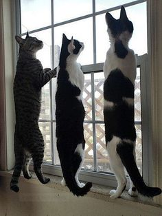 It's a bird, It's a plane.....It's your neighbor's cat on the fence!