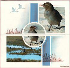 Les oiseaux de la Ria Formosa