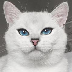 """Coby The Cat has given new meaning to the phrase """"cat-eye."""" With his gorgeous baby blues, the British shorthair manages to entrance his many (274K!) Instagram followers with each and every snapshot. Aside from the oceanic color of his iris, Coby's eyes have a thick, black line around them with a slight flick at the outer corners—making it look as though the cat's an eyeliner expert! The naturally beautiful feline also has, according to his Facebook bio, """"big blue eyes & an even bigger…"""