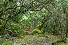 Los 15 lugares más mágicos de España | Parque Nacional de Garajonay, La Gomera, Islas Canarias