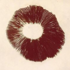 """ brown spore print #brooklynfilter #gnomelife #inoculateyourfriends #unknown #spores #sporeprint #mycowarrior #ispeakforthespores"" Mushroom Spores, Poster Prints, Posters, Etchings, Gnomes, Mushrooms, Hand Carved, Carving, Tattoos"