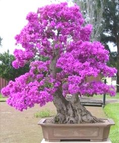 ♥♦Some #bonsai inspiration for today!♣♦ #BonsaiInspiration
