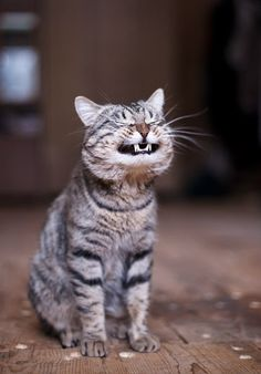 Amazing and funny pictures and videos from around the world: funny animals, beautiful nature scenery, universe etc, etc, etc. Smiling Animals, Funny Animals, Cute Animals, Smiling Cat, Wild Animals, Happy Animals, Crazy Cat Lady, Crazy Cats, Animal Pictures