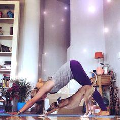 Rachel Brathen. (And her gorgeous dog, Ringo the Gringo). Really awesome yogi. Follow her on Facebook and Insragram. (Rachel Brathen Yoga Lifestyle & yoga_girl)
