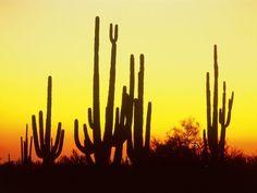 excellent cactus wallpaper