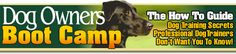 Dog training bootcamp.Everything you need to know to keep you and your dog happy.