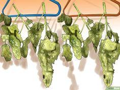 3 Ways to Trim Marijuana - wikiHow Medical Benefits Of Cannabis, Medical Marijuana, Cannabis Growing, Cannabis Oil, Marijuana Plants, Yellow Leaves, Grow Your Own, Herbs, 420 Girls