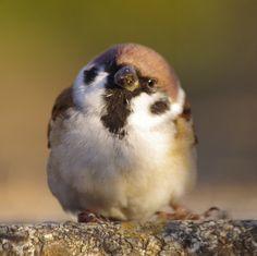Cute Birds, Pretty Birds, Small Birds, Little Birds, Beautiful Birds, Animals And Pets, Baby Animals, Funny Animals, Cute Animals