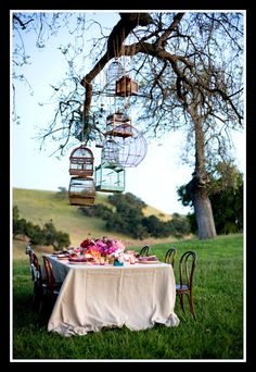Collection of bird cages over a table as chandeliers