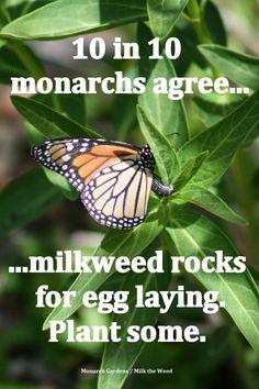 T h e | D e e p | M i d d l e: The Loss of Monarchs is a Loss of Far More