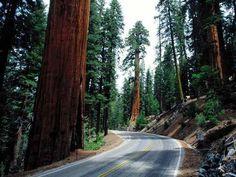 road..
