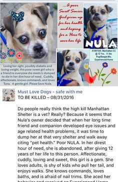 PASSED AWAY 9/04/16 IN HER ADOPTER´S ARMS --- SAFE 9-1-2016 by Second Chance Rescue --- SUPER URGENT 08/27/16 Manhattan Center NULA  – A1087530  FEMALE, CREAM / BLACK, PUG / BEAGLE, 12 yrs OWNER SUR – EVALUATE, NO HOLD Reason PET HEALTH Intake condition EXAM REQ Intake Date 08/27/2016,  http://nycdogs.urgentpodr.org/nula-a1087530/