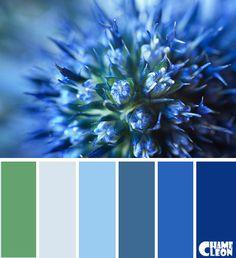 CHAMELEON. Color Palette.