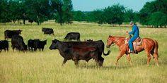 better pasture management