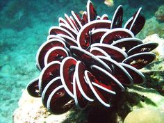 Ribbon Coral by Simon Spear