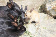 Viele Tiere tummeln sich beim Landhotel Spreitzhofer Animals, Kids Animals, Animais, Animales, Animaux, Animal Books, Animal